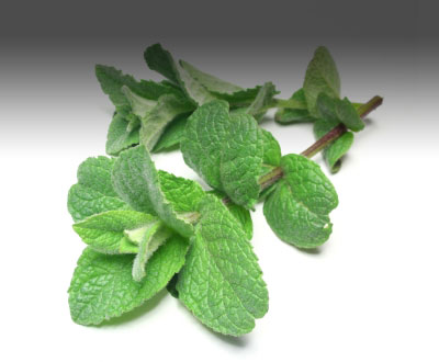 Culinary uses of peppermint