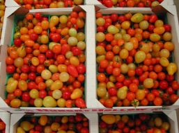 Ripened raw tomatoes