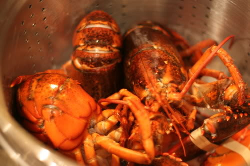 Cooking whole lobster