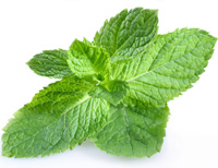 Home remedy for bad breath - the mint