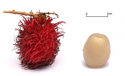 Rambutan- fruit and pulp