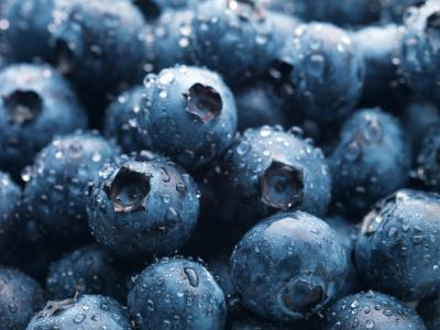 blueberries 'dark' secrets