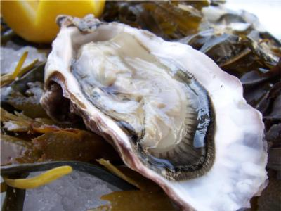 Oyster - A Sustainable Seafood