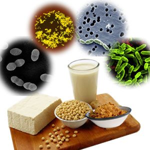 natural probiotics foods