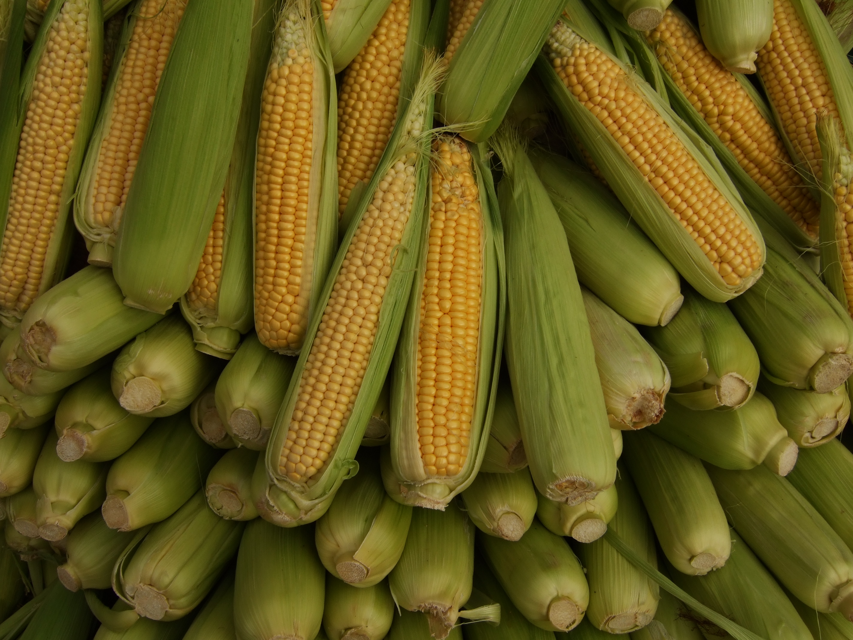 Corn (medicine) - Wikipedia