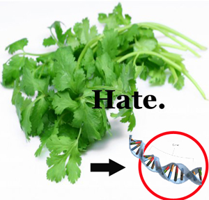 Genes responsible for hate_cilantro
