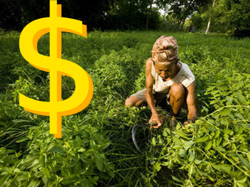 sustainable-agriculture is profitable