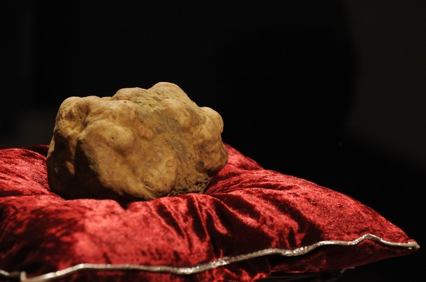 Stanley Ho, the owner of Macau casino bought the largest and most expensive white truffle