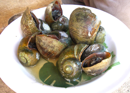 Snails in Bordelaise Sauce picture