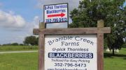 Bramble Creek Farmsupick Blackberries 1017849 By Cherylshomecooking