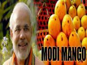Modi Mango