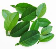 Cooking Asian cuisines with lime leaves