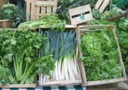 storing-green-vegetables