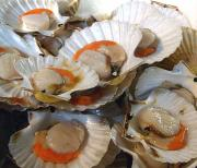 Scallop substitutes