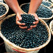 Vitamins present in acai berries - The vital health factor