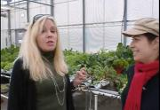 Greenhouse Hydroponic Tour