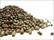 health benefits of Hemp seeds are many