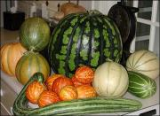 Decide which variety of melon you want to grow