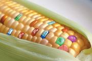 Your smartphone can now find out the truth behind GMO crops