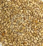 Pine nuts are used in many Mediterranean and North American dishes