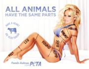 Pamela Anderson, the animal activist, calls to save turkey on Thanksgiving.