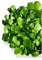 Watercress leaves are a culinary delight!