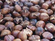Chestnut Roast