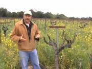 A Closer Look: Carneros Bud Break With Pedro Ceja