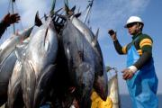 Bluefish Tuna has brought nuclear contamination to US shores