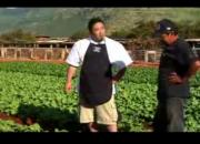 Tips On Baby Bok Choy Production