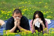 Herbal remedies for seasonal allergies
