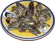 All About Oysters