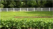 Experimental Row Crops