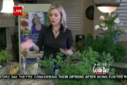 "The Herb Queen""- Christianne Klein On Good Day Sacramento"