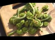 Fiddleheads Steamed