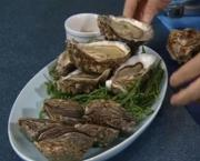 "Oysters ""A How-To Guide"""