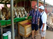 Surfing Goat Dairy - Segment 1