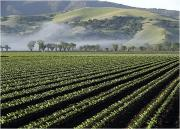 Salinas valley is the sald bowl of USA