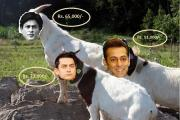 SRK, Salman and Aamir sold at Bakra Mandi on Bakrid