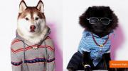 'American Beagle Outfitters' Line for Dogs is Likely an April Fool's Joke
