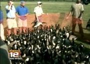 Goose Banding
