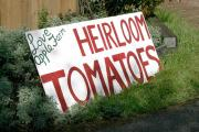About Heirloom Tomatoes