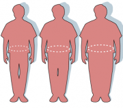 waist circumference determines obesity