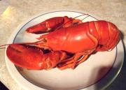 Cold Boiled Lobster