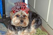 Keep your pets safe this New Year