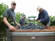 A Winemaker's Palate: How Rob Davis Tastes Vineyard Nuances in the Fruit from Munselle Vineyards