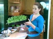 How to Grow Wheat Grass Indoors