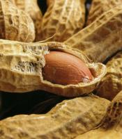 growing peanuts at home is a simple affair