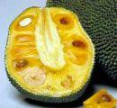 A ripened Jackfruit ready to be cut into pieces and served