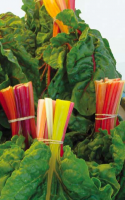 Swiss Chard Sauce for Pasta
